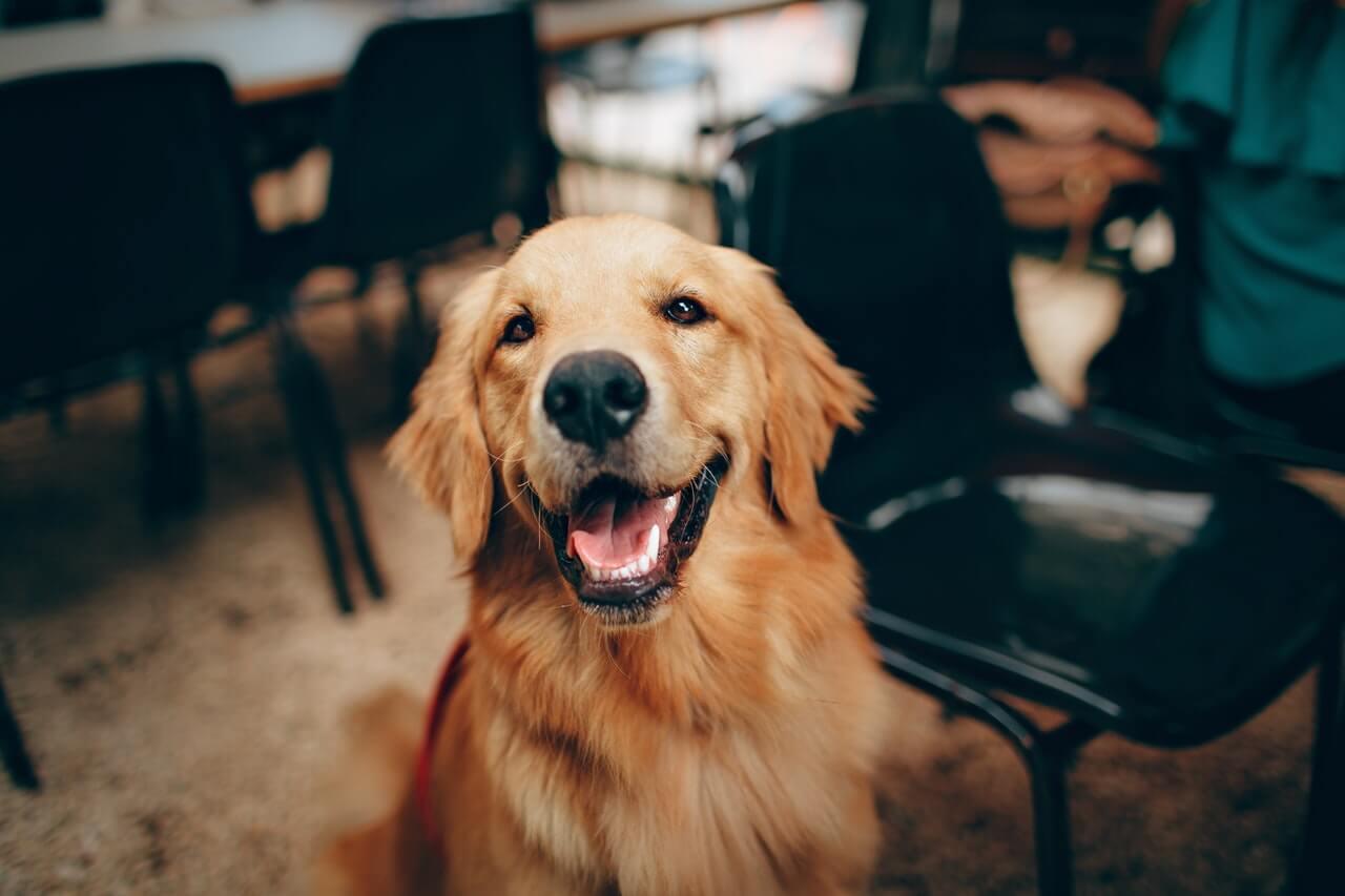 Przysmaki dla psa, jakie są najzdrowsze?
